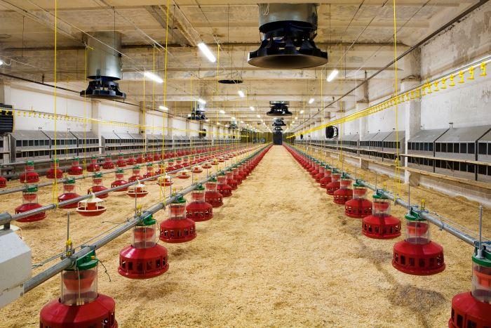 Automatisch voedingssysteem kippenren capcitieve en ultrasoon sensoren